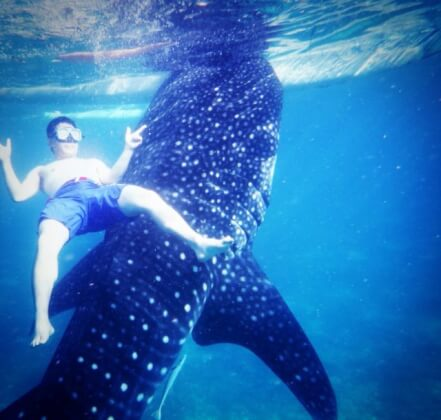 オスロブのジンベイザメと泳ぐ