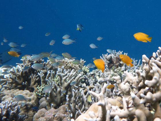 セブ島西海岸リゾートのモアルボアル島