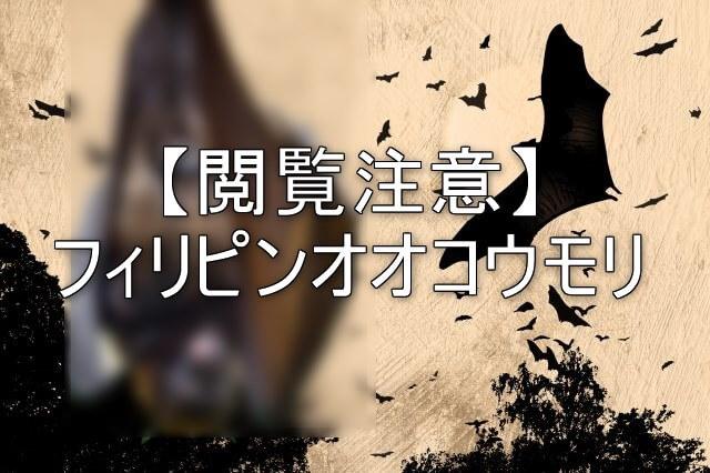 世界最大フィリピンオオコウモリ