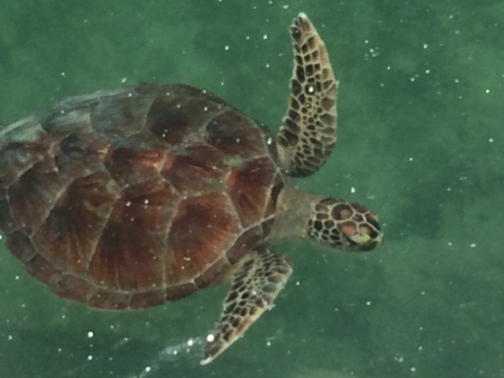turtle-min