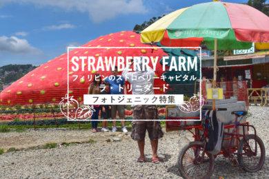 【フォトジェニック特集】ラ・トリニダード「ストロベリーファーム(Strawberry Farm)」のSNS映えポイント5選