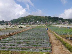 いちごの農園